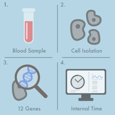 From a single blood sample (1) cells are isolated (2) and the activity of twelve time-telling genes is determined (3). From this, a computer algorithm calculates the state of the internal clock (4). Copyright: Kramer/Charité.